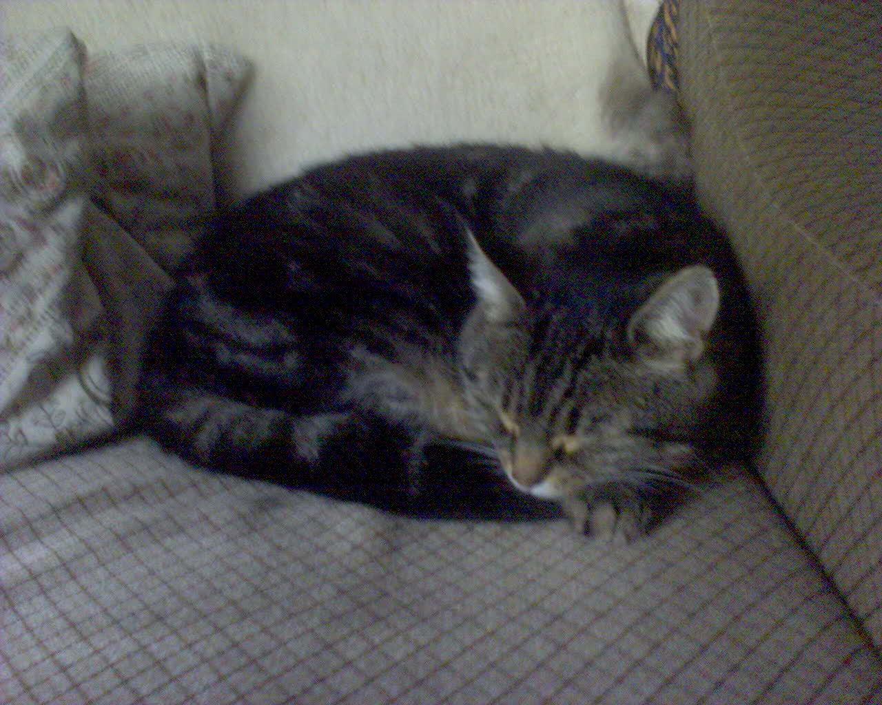 Katze, part 3